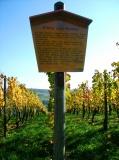 Infos zum Weinbau