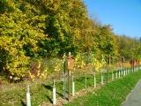 Infos zum Weinbau entlang des Weinlehrpfades