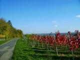... und immer einen tollen Blick auf Markelsheim und die Weinberge