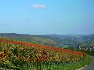 Blick über die Weinberge auf Markelsheim