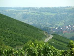 Blick über die Weinberge nach Elpersheim